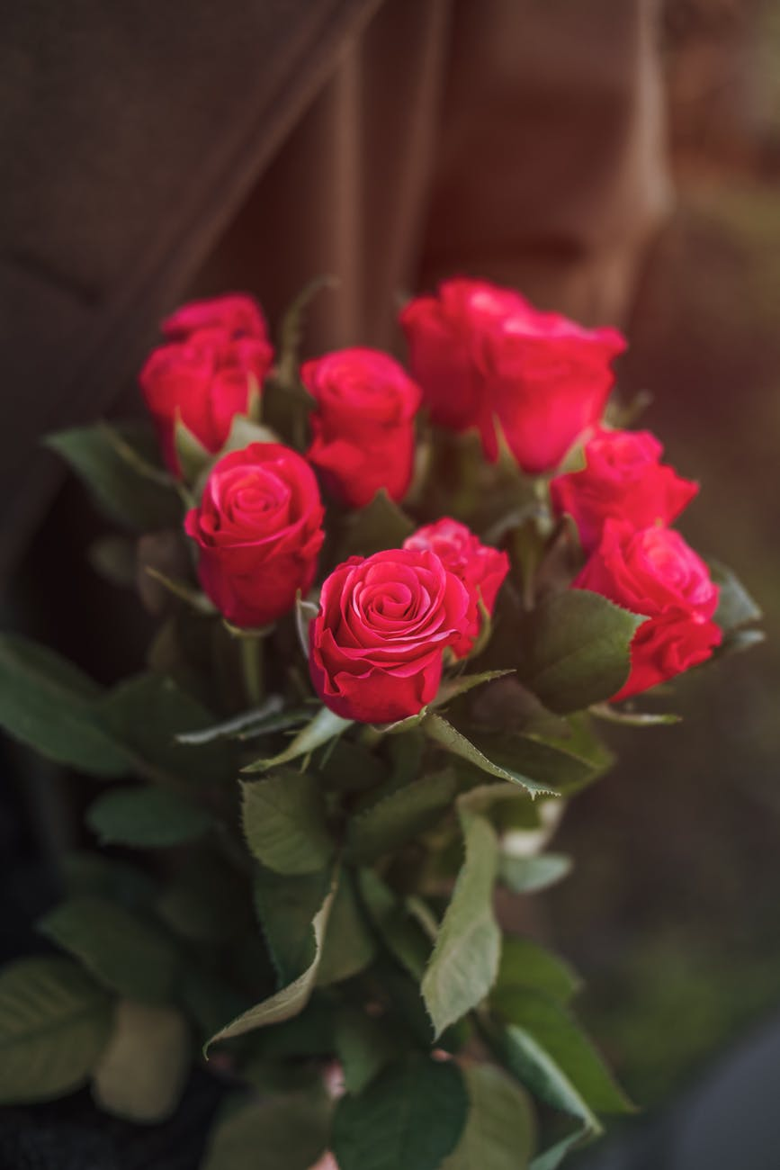 unrecognizable person holding bunch of fresh red roses