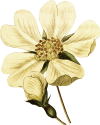 Flower-17-web